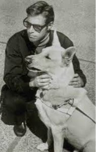 Screen shot of James Franciscus as Longstreet, kneeling next to his white german shepherd guide dog