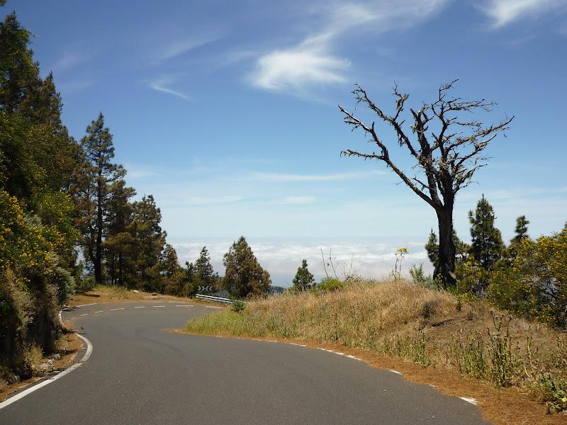 Straße mit Wolken im Hintergrund und Bäumen vorne.
