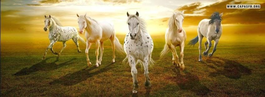Capas para Facebook Cavalos