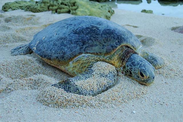 Taman-Pulau-Penyu-Turtle-Island-Park