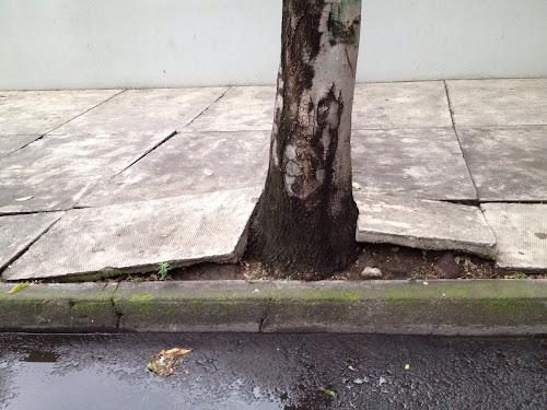 Tree sidewalks mexico