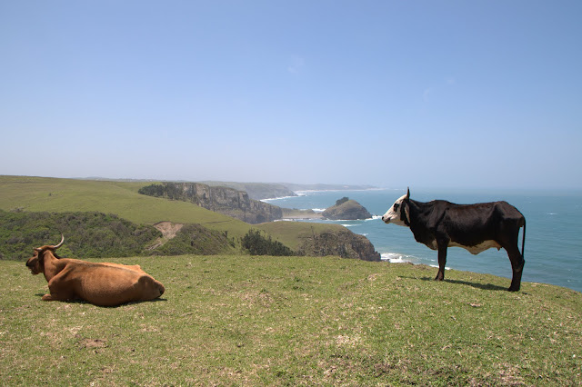 The Transkei