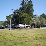 Wattamolla Picnic area (31105)