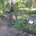 Blue Gum Walk Dedication plaque next to Great North Walk sign (70657)