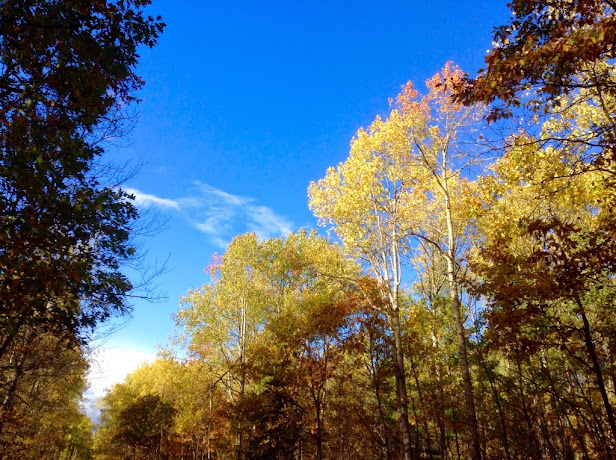 Walking the woods roads near Bonnechere Provincial Park