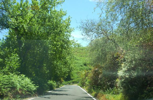 grüne Bäume neben der Straße nach Fontanales.