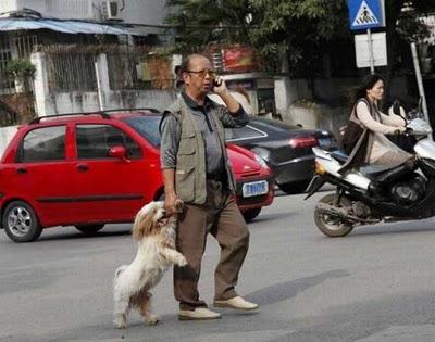 كلاب تمشي على قدمين-غرائب وعجائب-منتهى