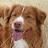 Coffie Dog