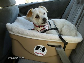 FidoRido Pet Car Seat One Seater Holds Dogs Up To 30 Lbs Tan