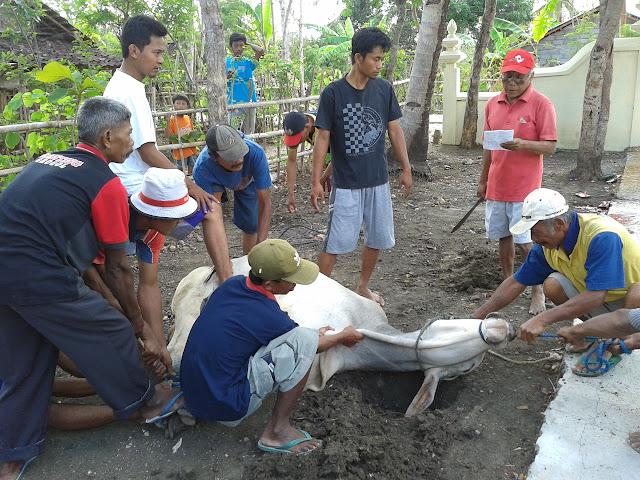 Penyembelihan Hewan Kurban di Dusun Karangmojo B