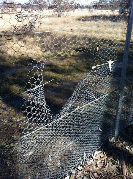 fence vandalism