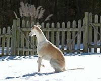 Tyler - Snow 2010