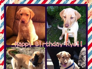 Happy 1st Birthday Rye!