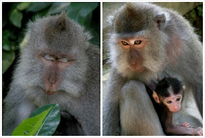Bits of Bali _ Monkey forest