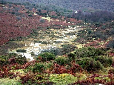 Valley in Dartmoor National Park