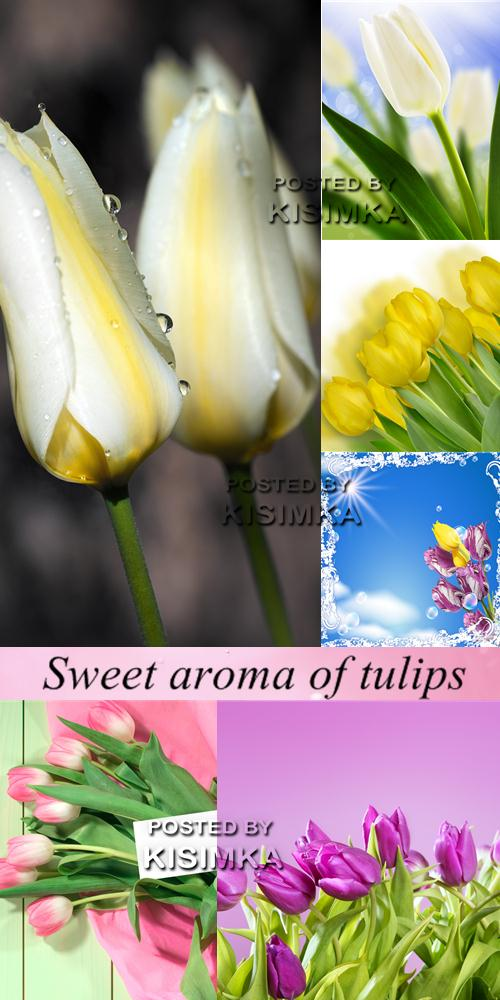 Stock Photo: Sweet aroma of tulips