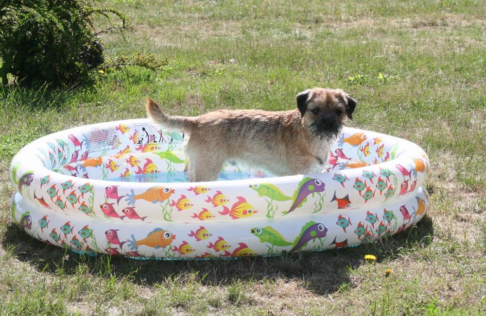 Piscine chien for Piscine pour chien pas cher