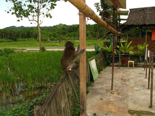 Из зимы в лето. Филиппины 2011 - Страница 3 IMG_0162