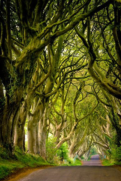 Irlandia Pln -- the Dark Hedges..
