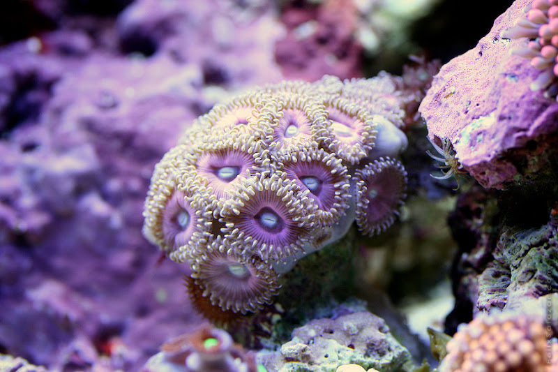 Macro Shots of Underwater Corals by Felix Salazar