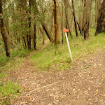 Track marker on the red track near the summit of Mt Sugarloaf (324395)