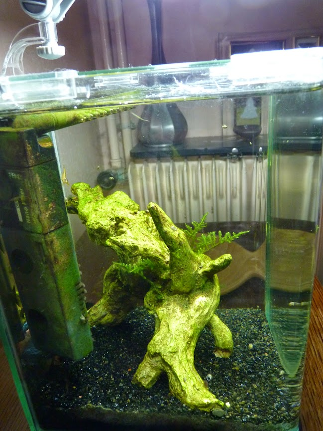 Ma petit histoire Aquariophile de 2009 à aujourd'hui  P1060207