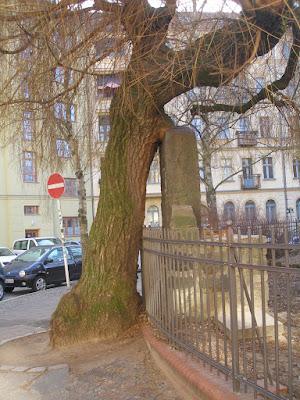 Baum liebt Stein