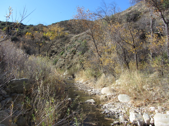 wide, rocky stream bed with water flowing happily along and some trees