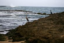 Dos aves costeras se posan sobre una roca en la playa.