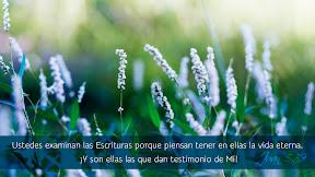 Juan 5.39