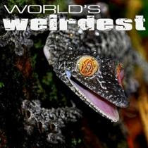 World's weirdest - Những sinh vật kỳ lạ nhất thế giới