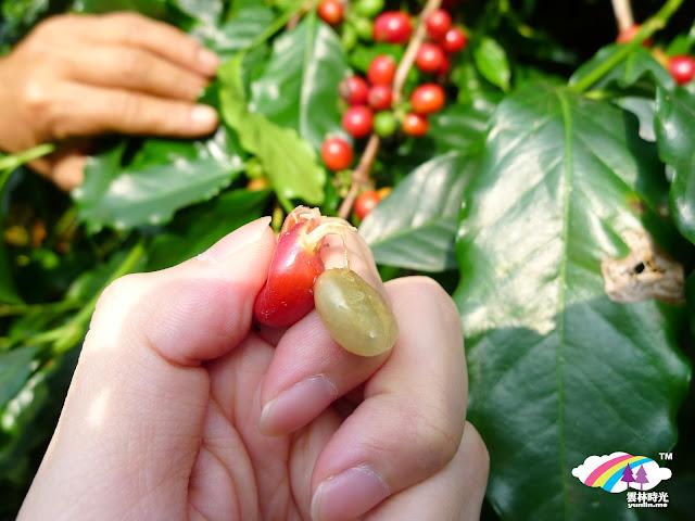 咖啡豆原型