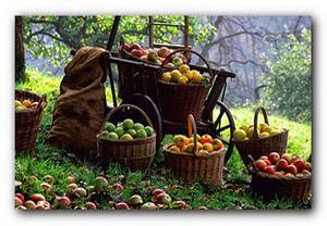 урожай в августе, сбор урожая