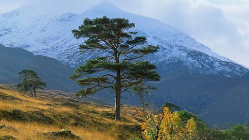 Scenic Strathfarrar, Scotland.jpg
