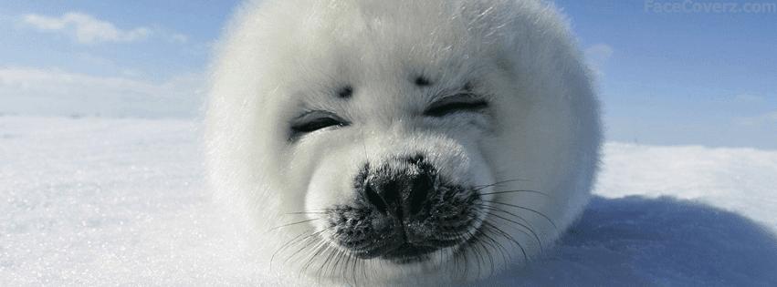 Beyaz yavru fok balığı facebook kapak fotoğrafı