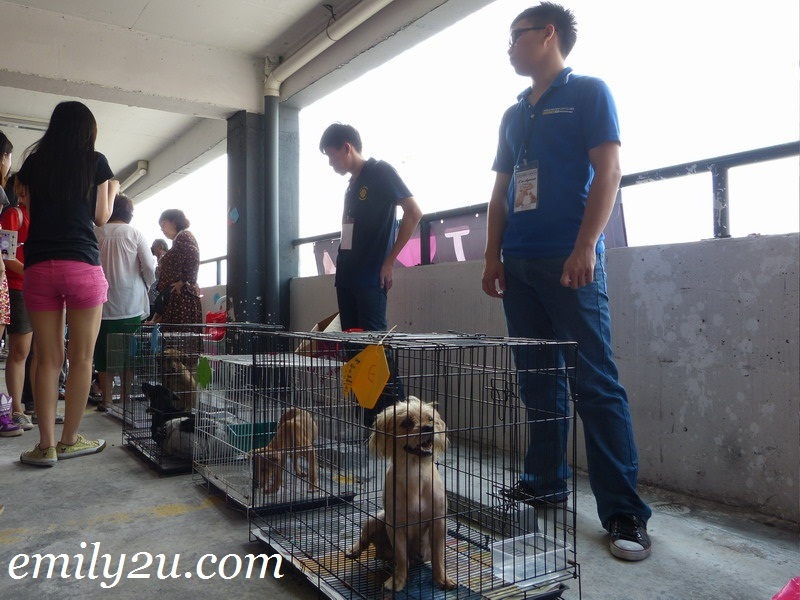 pet adoption programme