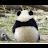 H Tao avatar image