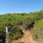 Track into the heath on Jibbon Head (98945)
