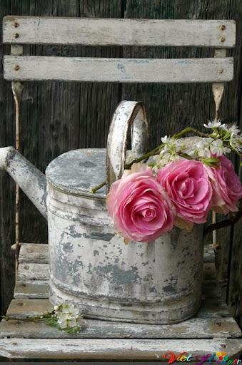 Biến xô tưới nước cũ thành lọ hoa