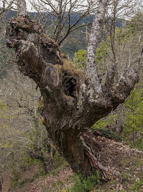 tronco de árbol sobre una colina