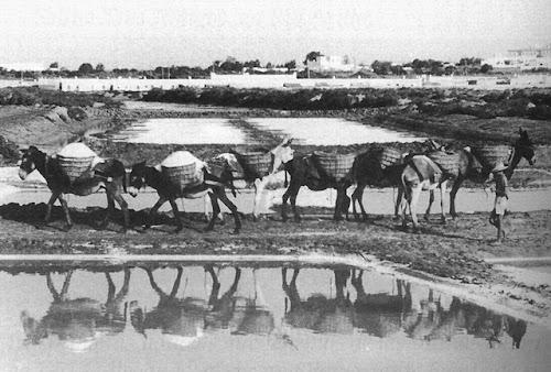 Burros transportando la sal