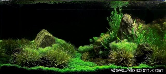 phông nền hồ cá rồng, phong nen ho ca canh 12