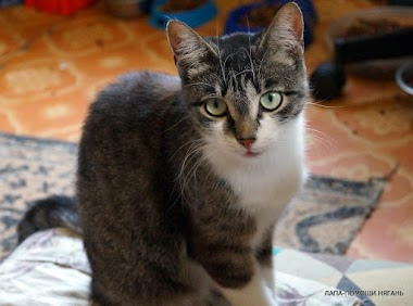 Маня - Cимпатичная кошечка с покладистым характером