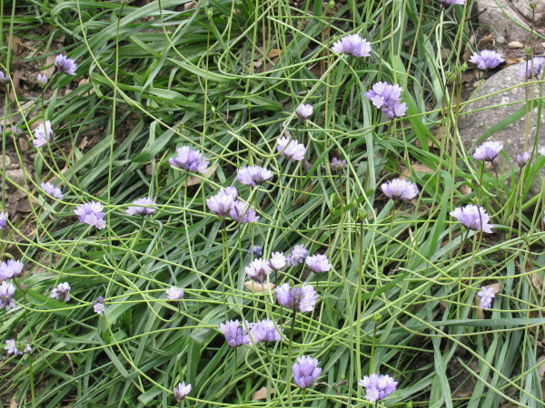 A few tiny flowers along the ground.