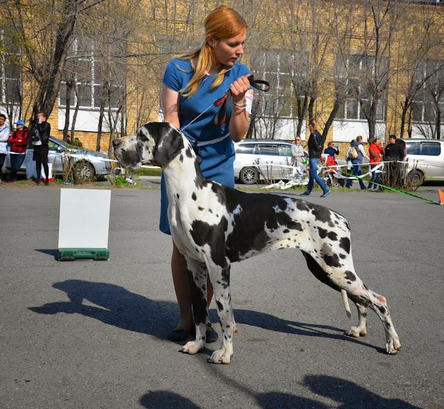 Кубок Аризоны-14(ПК)+ЧРКФ, Красноярск, 27 апреля 2014 DSC_5615