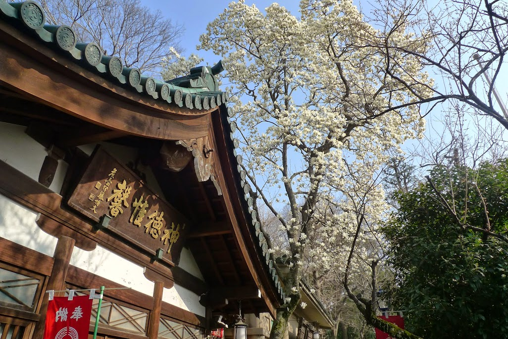 tokyo ueno sanctuaire inari