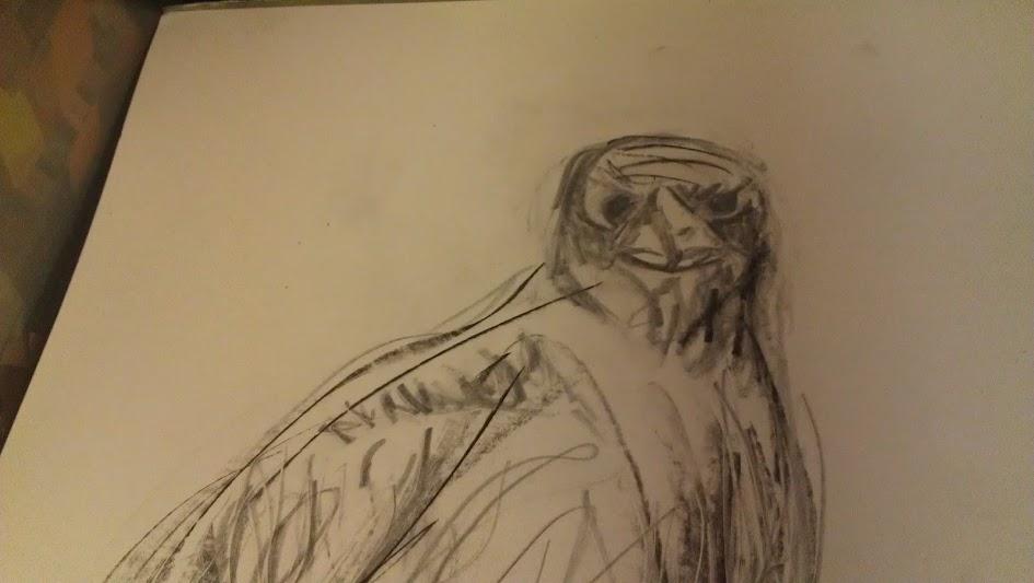 Curious Raven Sketch 2