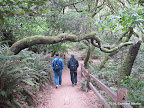 Johnstone Trail to Shell Beach
