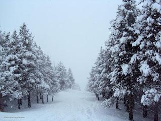 DSC01430 - Nevando el sábado, paraiso el domingo.