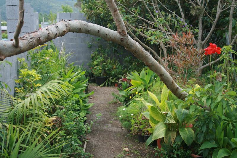 Futur jardin d'orchidées!!! IMG_3534